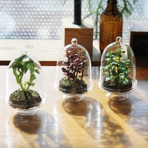 glass plants